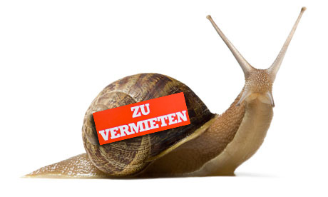 snail for rent