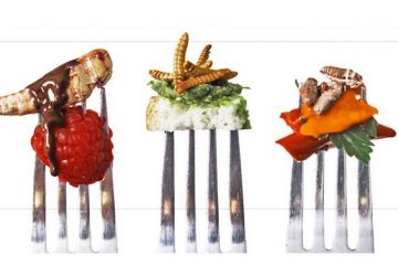 Snack Insects is one of Germany's funky food startups. Photo credit: Snack Insects